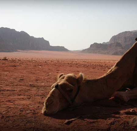 Wadi-Rum-Jordanie